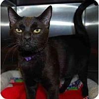 Adopt A Pet :: Baxter - Modesto, CA