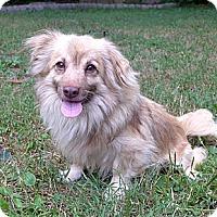 Adopt A Pet :: Crockett - Mocksville, NC