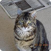 Adopt A Pet :: Ellie-May (woodbury petsmart) - Roseville, MN