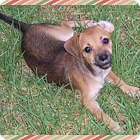 Adopt A Pet :: Haylee - Colton, CA