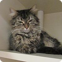 Adopt A Pet :: Robin - Elizabeth City, NC