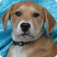 Adopt A Pet :: Empire Apple Cornerstone - Cuba, NY