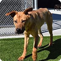 Adopt A Pet :: Llana aka Len/foster to adopt - Hillside, IL