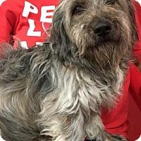 Adopt A Pet :: Daniel - Centerville, GA