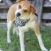 Adopt A Pet :: Breezy - Dalton, GA