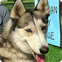 Adopt A Pet :: MINKA - Yucca Valley, CA