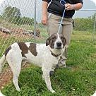 Adopt A Pet :: Malvo