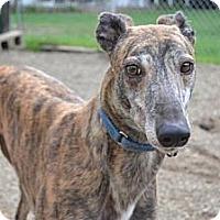Adopt A Pet :: Rankin (Flying Rankin) - Chagrin Falls, OH