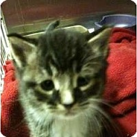 Adopt A Pet :: Tid Bit - New Egypt, NJ