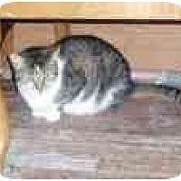 Adopt A Pet :: Diamond - North Boston, NY