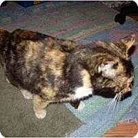 Adopt A Pet :: Moki - Scottsdale, AZ