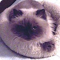 Adopt A Pet :: Emmy - Summerville, SC