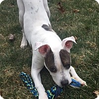 Adopt A Pet :: Monti - Rockaway, NJ