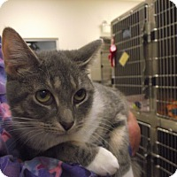Adopt A Pet :: Danielle - Chambersburg, PA
