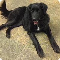 Adopt A Pet :: MAGGIE - Hurricane, UT