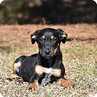 Adopt A Pet :: Boodles - Groton, MA