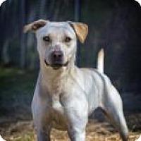 Retriever (Unknown Type) Mix Dog for adoption in Columbus, Georgia - Julieta 1637