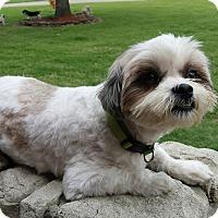 Adopt A Pet :: Gracie 1 meet me 6/2 - Manchester, CT