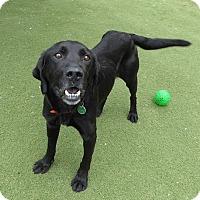Adopt A Pet :: Moe - Buckeystown, MD