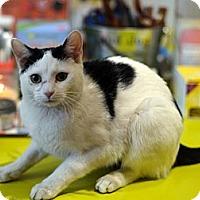Adopt A Pet :: Carmen - Brooklyn, NY
