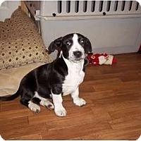 Adopt A Pet :: Braxton - Adamsville, TN