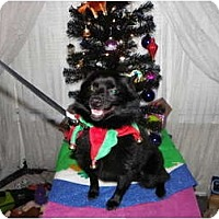 Adopt A Pet :: TURK - Hesperus, CO