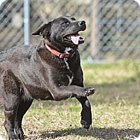 Adopt A Pet :: Moon Star - El Campo, TX