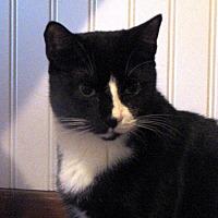 Adopt A Pet :: Stubs - Berkeley Hts, NJ
