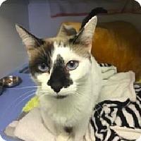 Adopt A Pet :: Sylvia - Novato, CA