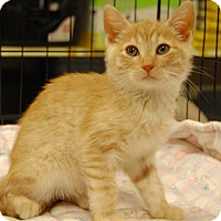 Adopt A Pet :: Dugan - Whittier, CA