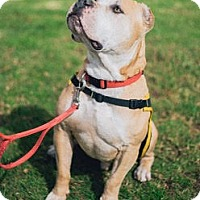 Adopt A Pet :: Mufasa - Sherman Oaks, CA