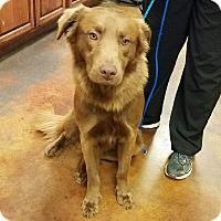 Adopt A Pet :: Twix - Minneapolis, MN