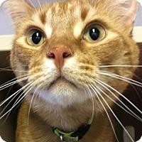 Adopt A Pet :: Oliver - Lloydminster, AB