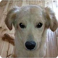Adopt A Pet :: BoBo - Denver, CO