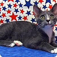 Adopt A Pet :: Naomi - Orlando, FL