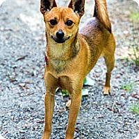 Adopt A Pet :: Emmit - Tinton Falls, NJ
