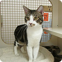 Adopt A Pet :: Klumper - Gilbert, AZ