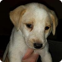 Adopt A Pet :: Baby Jack - Marlton, NJ