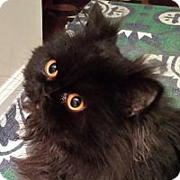 Adopt A Pet :: Dallas - Columbus, OH