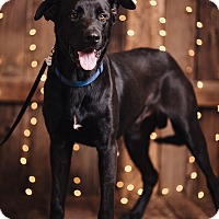 Adopt A Pet :: Jake - Portland, OR