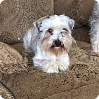 Adopt A Pet :: Donovan - Sharonville, OH