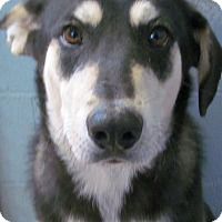 Adopt A Pet :: Gino - Silver City, NM