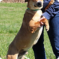 Adopt A Pet :: Cole~ meet me! - Glastonbury, CT