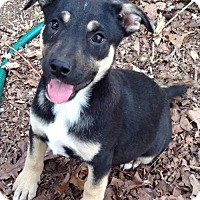 Adopt A Pet :: Uri - Allentown, PA