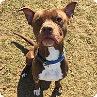Adopt A Pet :: Max - Chambersburg, PA