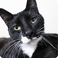 Adopt A Pet :: Monaco - Troy, MI