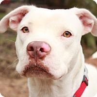 Adopt A Pet :: Savannah - Tomball, TX