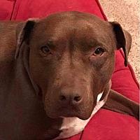 Adopt A Pet :: Hunter - Kewanee, IL