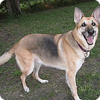 Adopt A Pet :: Umeko - Green Cove Springs, FL