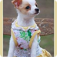 Adopt A Pet :: Precious - Albany, NY